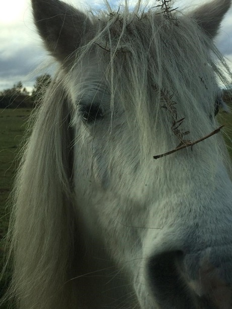 Year 10 pupil Leo captured a close-up of a horse.