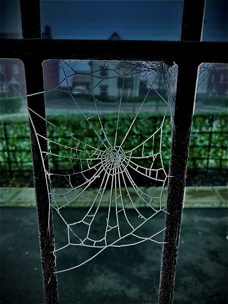 Year 7 student Corey photographed a delicate spider's web.