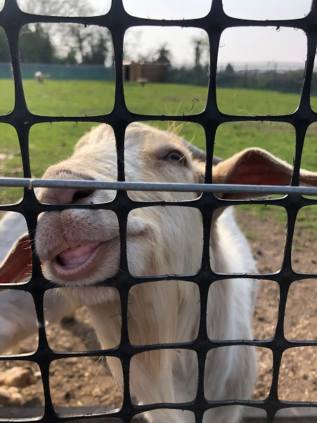 Joe, also in Year 7, snapped an inquisitive goat.