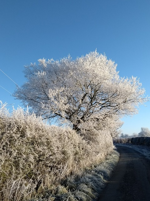 Year 9 student Emma photographed countryside frost.